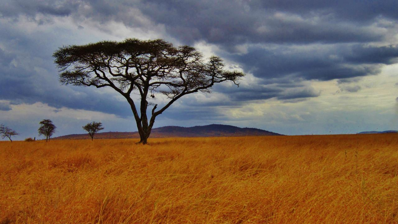Header Image, Photo Gallery - Tanzania