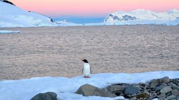 UC Davis Study Abroad, Seminars Abroad Antarctica Program, Photo Album, Image 3
