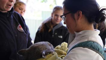 UC Davis Study Abroad, Summer Internship Australia Program, Photo Album, Image 12