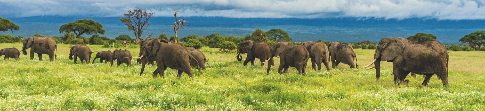 UC Davis Study Abroad, Summer Abroad Africa, Maasailand, East Africa: Cultural Immersion, Wildlife Conservation, and Community Activism Program, Header Image, Overview Page